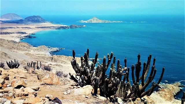 Parc Pan de Azucar - Carnet de voyage au Chili / Après la flemme