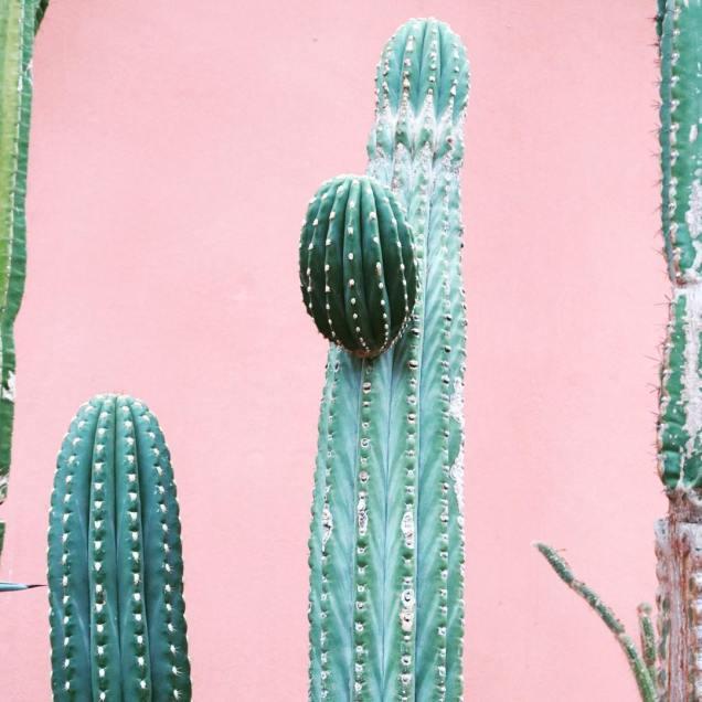 Cactus Cereus par Hortus Amsterdam