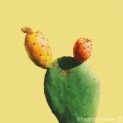 Opuntia Cactus par Jonathan Lo