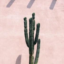 Cactus Cereus par Zoa Concept