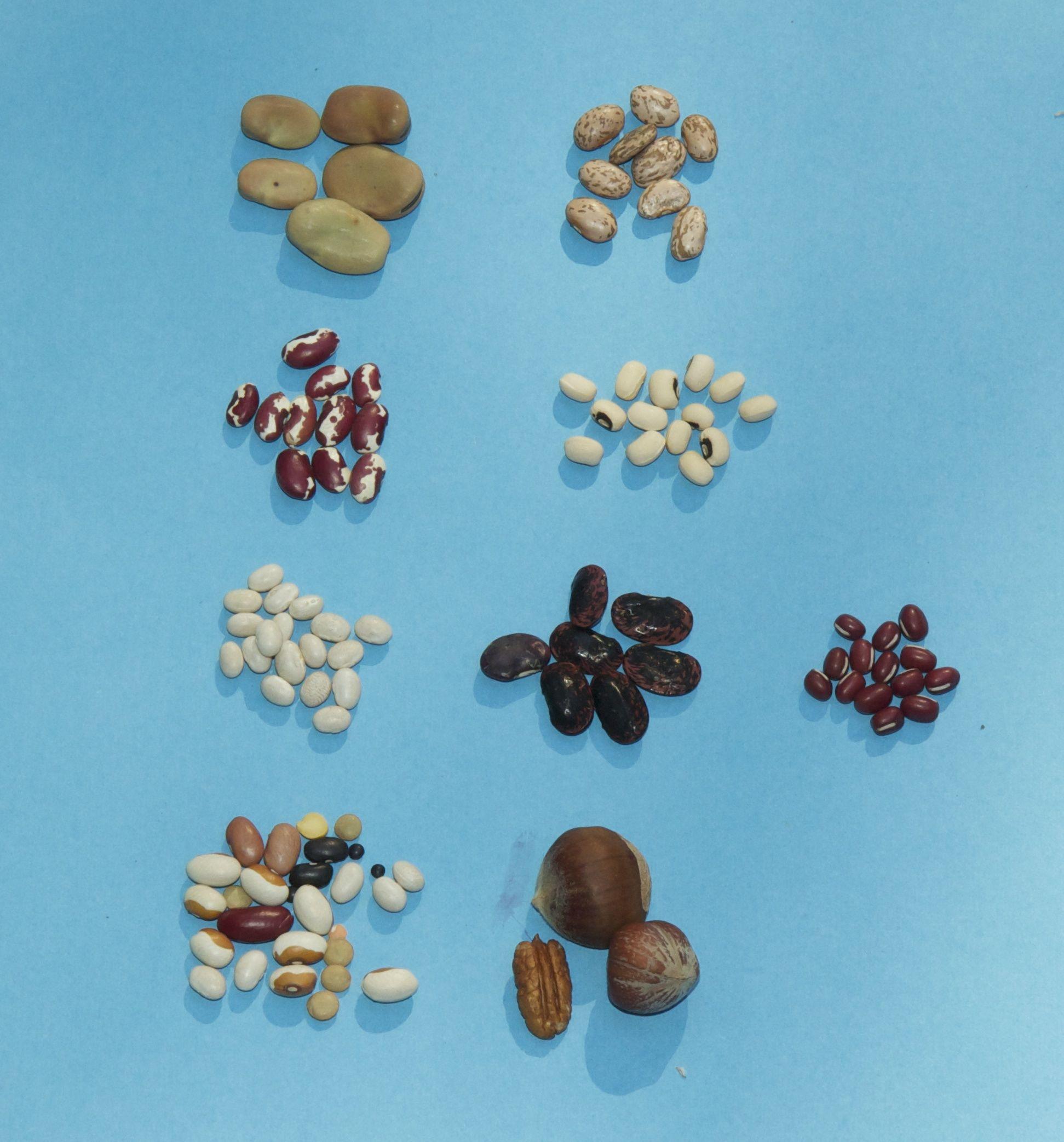 Preschool Worksheets We Eat Seed Preschool Best Free