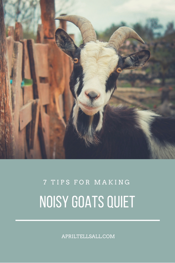7 tips for making noisy goats quiet april tells all