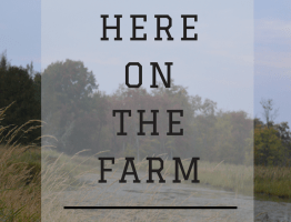 Here On The Farm…..