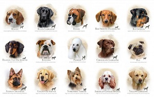 Top Trendy Apps For Dog Owners in Nigeria