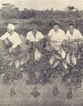 Waldemar, compadre Alcindo,Dico e Acacio exibem, orgulhosos, os curimbatás apanhados no rio Tietê, desemboque no Rio Sorocaba.