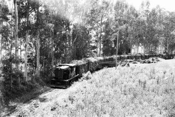 Locomotiva no Engenho Central II - Foto: Cícero Correa dos Santos