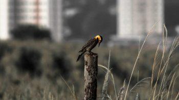 Exposição fotográfica debate relações entre natureza, cultura e cidade