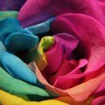 Amor em flor – Denis Marcorin
