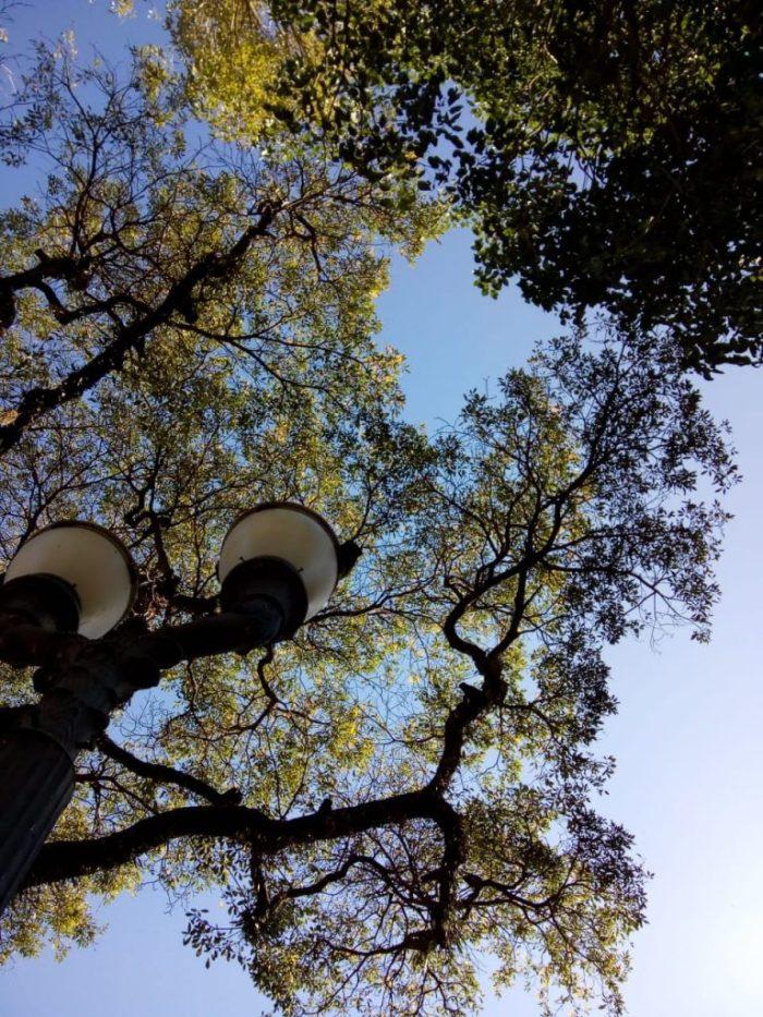 Olhar para o céu – Cynthia da Rocha