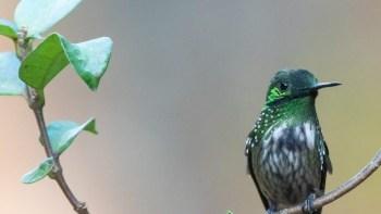 A beleza das aves no CCMW