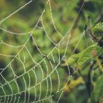 Pérolas da natureza orvalhada – Denis Marcorin