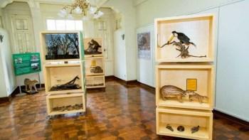 A beleza da fauna em exposição