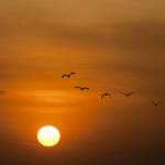 sol-gaivotas_Pixabai-2