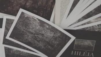 Exposição Hiléia reúne imagens da floresta amazônica no Museu Prudente de Moraes