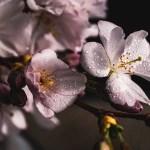 Primavera_Pixabai