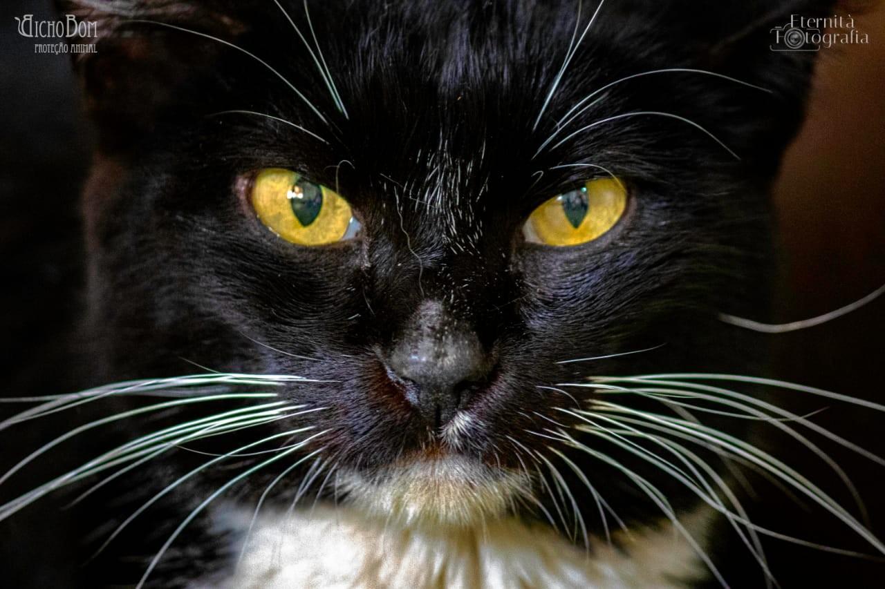 ONG Bicho Bom Proteção Animal promove mais um bingo beneficente