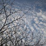 Árvore de algodão de nuvens – Cynthia da Rocha