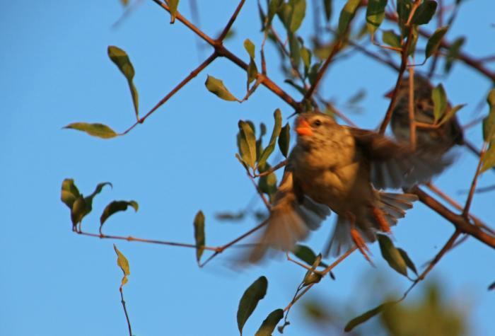 animal-avian-beak-biology-469315