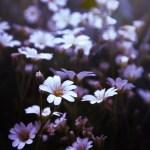 bloom-1866591_1920