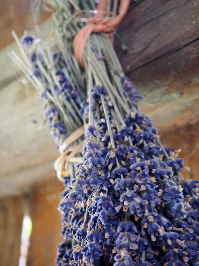 lavender-2711151_1920