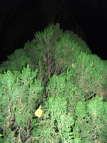 Verde 02-05-2011 Cynthia