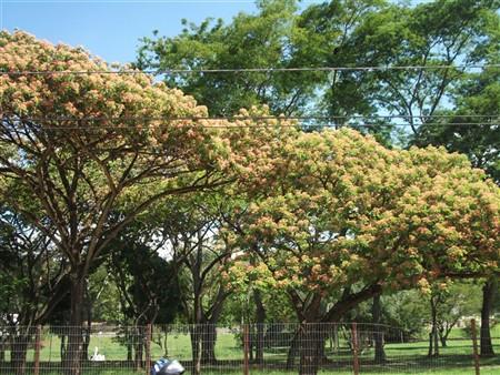 Natureza Floral 17-04-2012 Cynthia da Rocha
