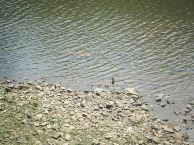 """Pássaro a """"beira rio"""""""