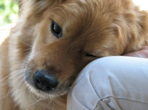 cachorro-sente-amor