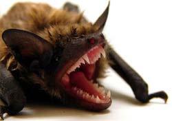 morcegos3