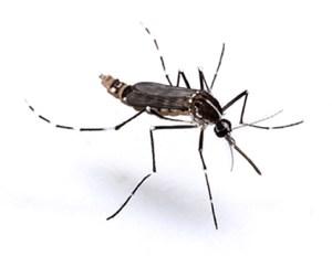 Vulcao_dedetizadora_Aedes