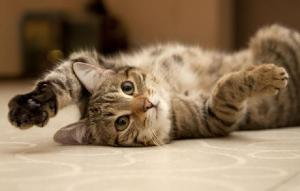fotos-gatinhos-pose