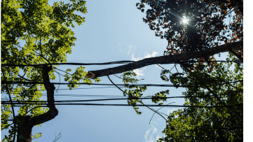 Branch on Down Power Line