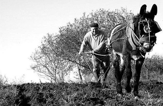 Risultati immagini per immagine il contadino