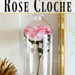 Beauty and the Beast Inspired Rose Cloche