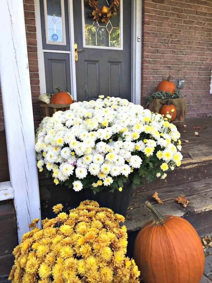 Fall front porch decorated with plaid, a Harvest sign and fall mums