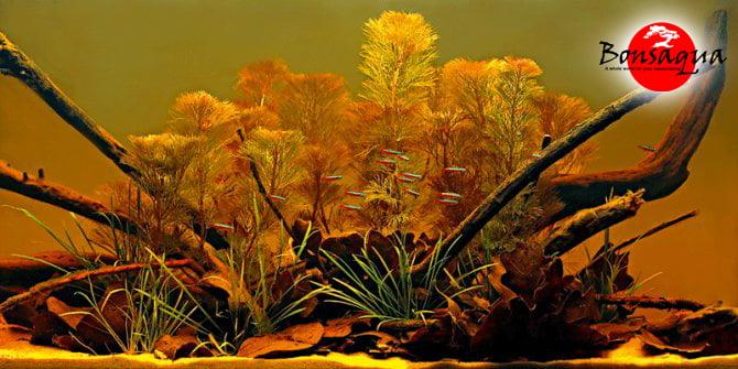 biotope bonsaqua