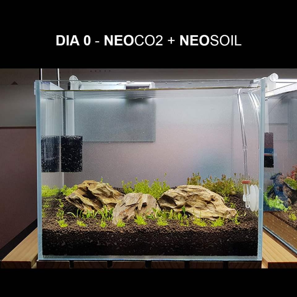 Efecto botella co2 en acuario plantado dia cero