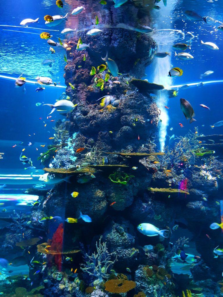 acuarios beneficiosos para la salud, ¿Por qué los acuarios son beneficiosos para la salud?