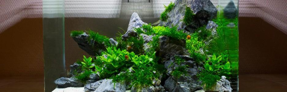 beplant aquarium opstarten