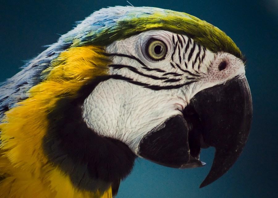 Hrana za velike papagaje
