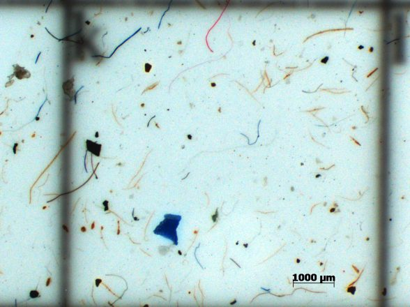 Microplastic research and conservation