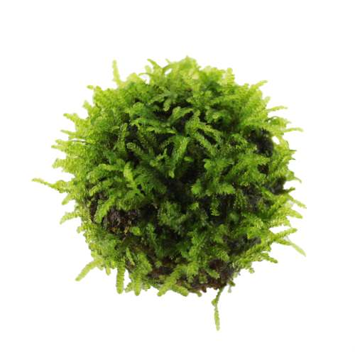 Where Buy Floating Aquarium Plants