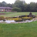 Pond in need of restoration