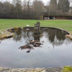 Pond restoration in Bristol