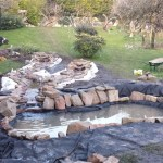 Wildlife pond: The pond liner is concealed partly with rocks