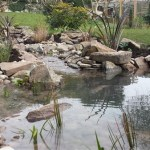 Wildlife pond Bristol: Architectural planting around the pond