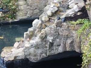 Water feature restoration