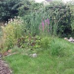 pond and bog garden