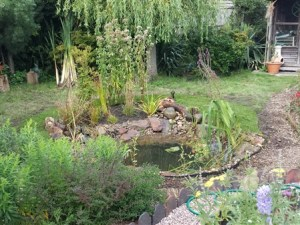 wildlife bog garden and nature pond