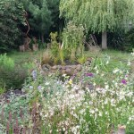 Aquaflora Landscapes the bog garden experts